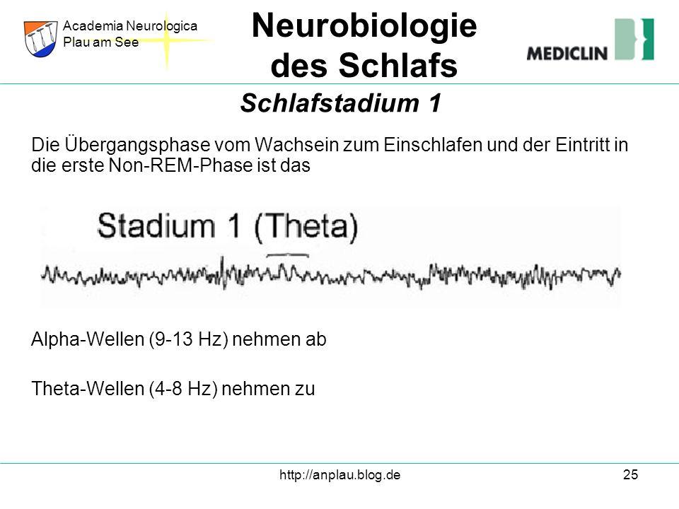 http://anplau.blog.de25 Die Übergangsphase vom Wachsein zum Einschlafen und der Eintritt in die erste Non-REM-Phase ist das Alpha-Wellen (9-13 Hz) neh