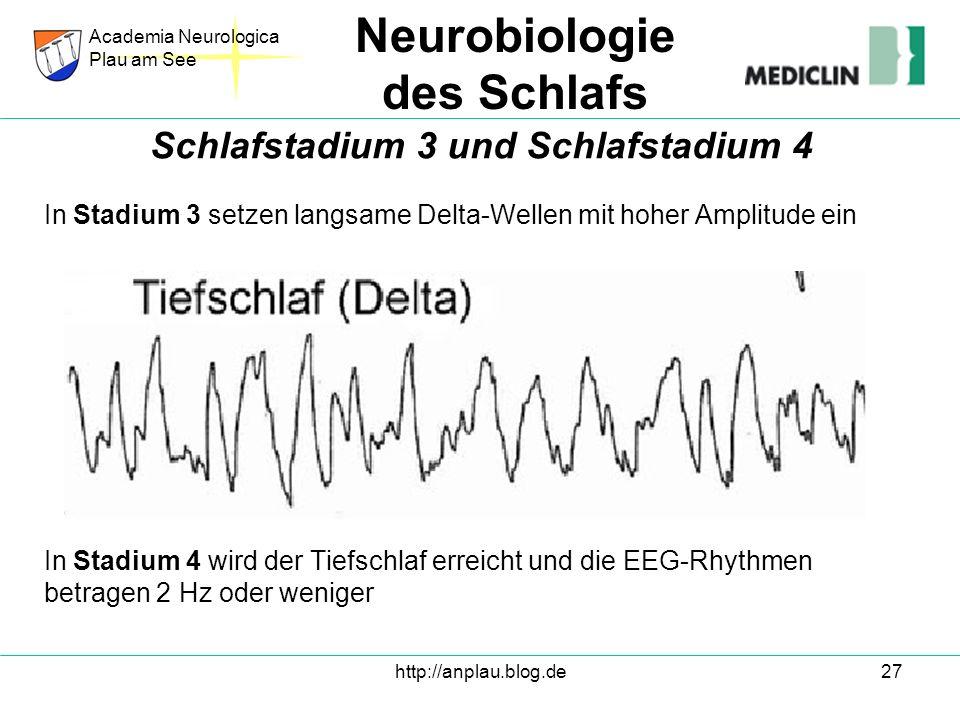 http://anplau.blog.de27 In Stadium 3 setzen langsame Delta-Wellen mit hoher Amplitude ein In Stadium 4 wird der Tiefschlaf erreicht und die EEG-Rhythm
