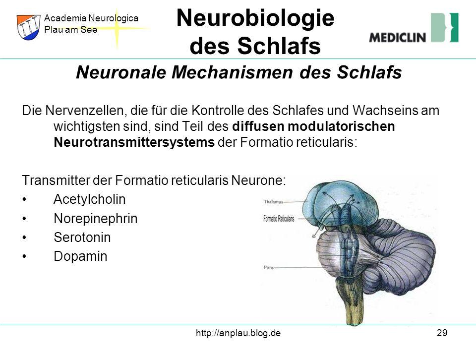 http://anplau.blog.de29 Die Nervenzellen, die für die Kontrolle des Schlafes und Wachseins am wichtigsten sind, sind Teil des diffusen modulatorischen