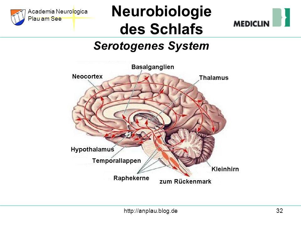 http://anplau.blog.de32 Academia Neurologica Plau am See Neurobiologie des Schlafs Serotogenes System