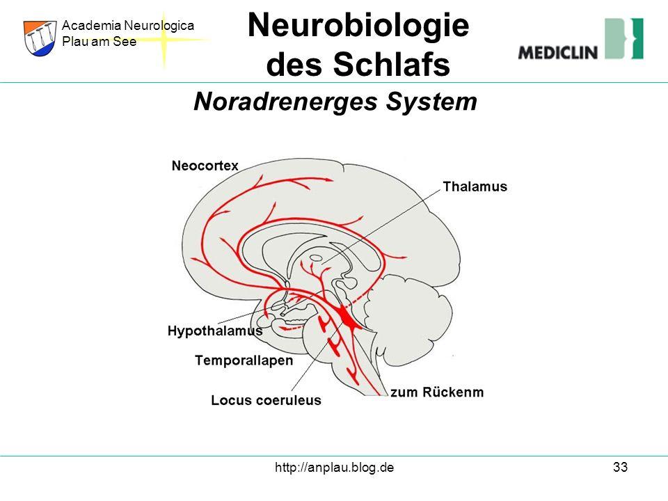 http://anplau.blog.de33 Academia Neurologica Plau am See Neurobiologie des Schlafs Noradrenerges System