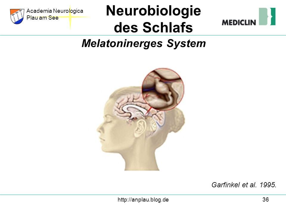 http://anplau.blog.de36 Academia Neurologica Plau am See Neurobiologie des Schlafs Melatoninerges System Garfinkel et al. 1995.