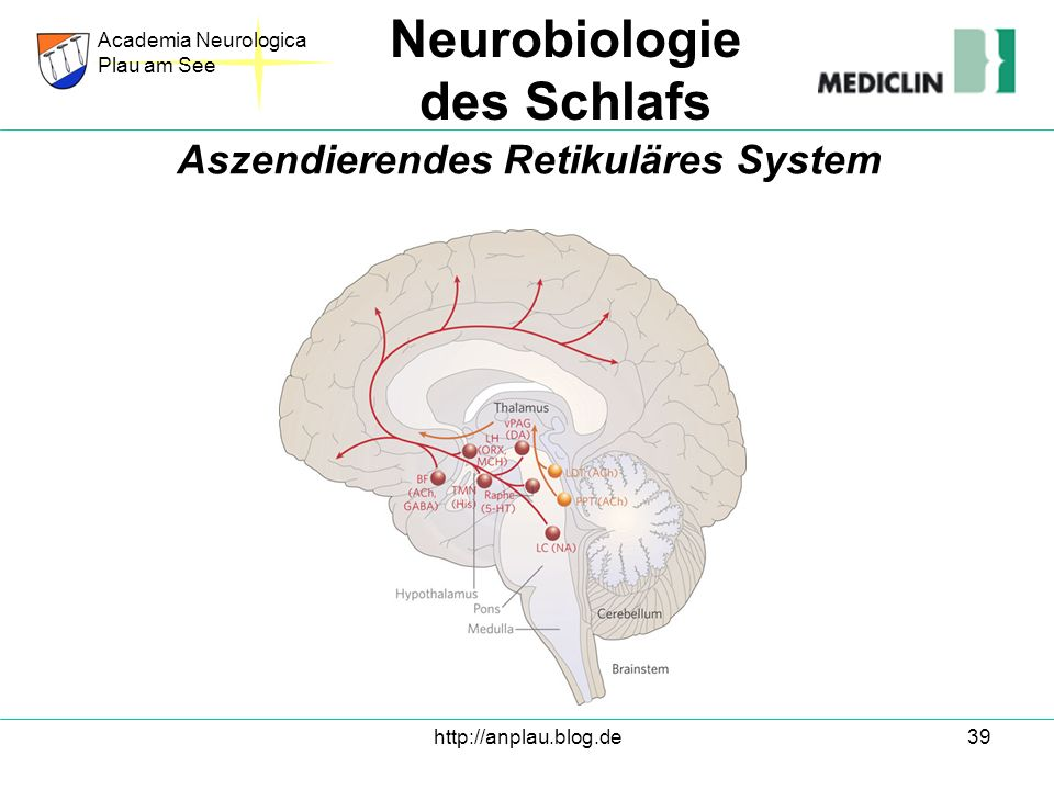 http://anplau.blog.de39 Academia Neurologica Plau am See Neurobiologie des Schlafs Aszendierendes Retikuläres System