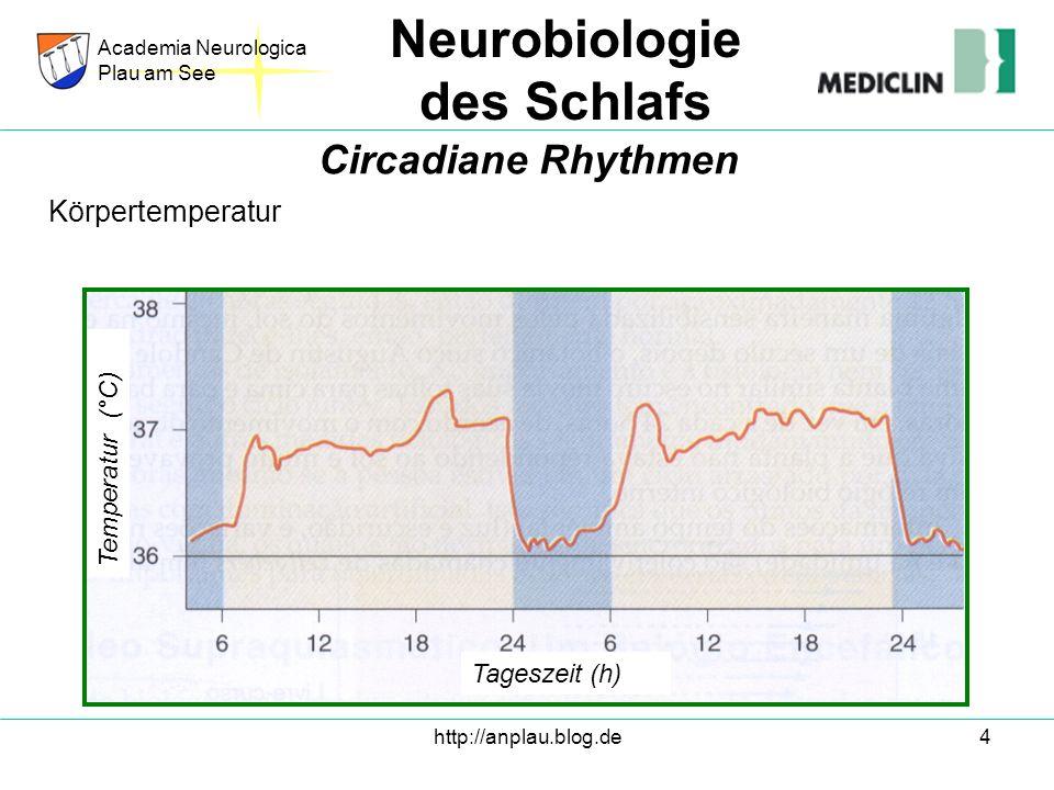 http://anplau.blog.de4 Körpertemperatur Academia Neurologica Plau am See Neurobiologie des Schlafs Circadiane Rhythmen Tageszeit (h) Temperatur (°C)
