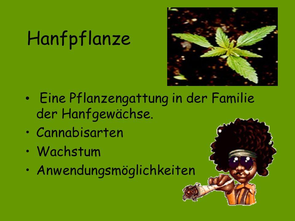 Cannabis oder kein Cannabis, das ist die frage...