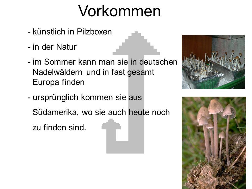 Vorkommen - künstlich in Pilzboxen - in der Natur - im Sommer kann man sie in deutschen Nadelwäldern und in fast gesamt Europa finden - ursprünglich kommen sie aus Südamerika, wo sie auch heute noch zu finden sind.