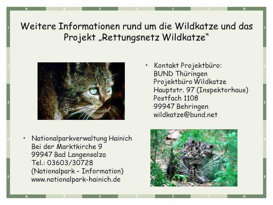Weitere Informationen rund um die Wildkatze und das Projekt Rettungsnetz Wildkatze Nationalparkverwaltung Hainich Bei der Marktkirche 9 99947 Bad Lang