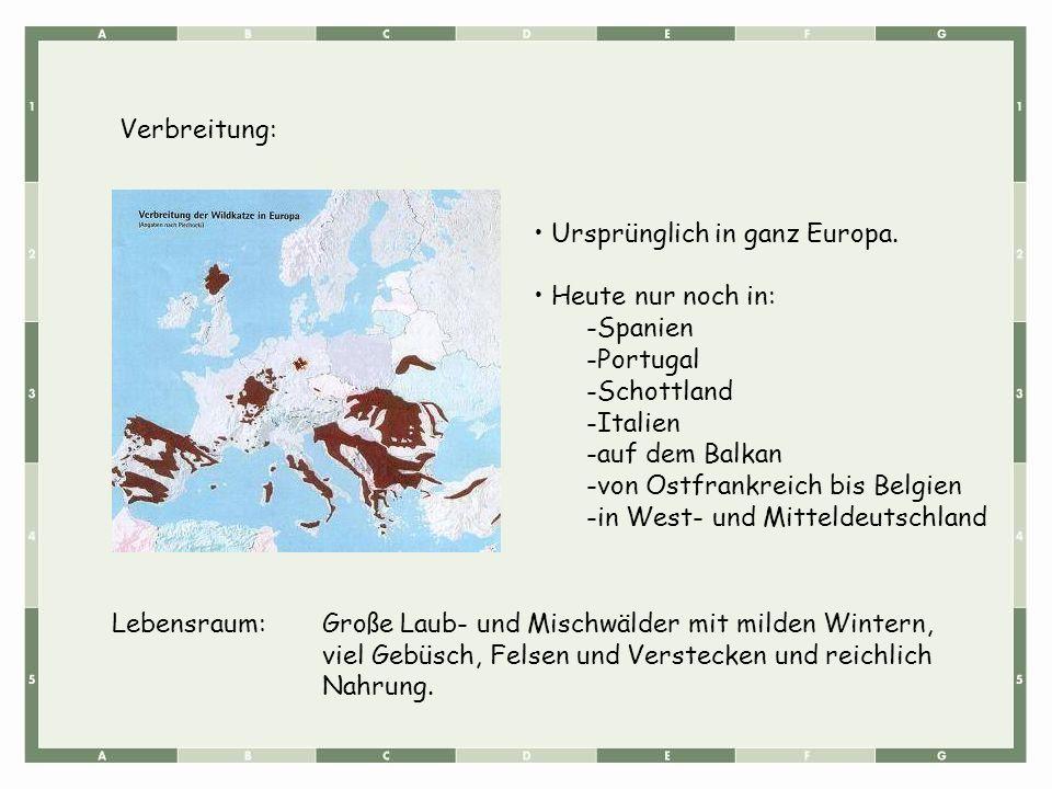 Lebensraum:Große Laub- und Mischwälder mit milden Wintern, viel Gebüsch, Felsen und Verstecken und reichlich Nahrung. Ursprünglich in ganz Europa. Heu