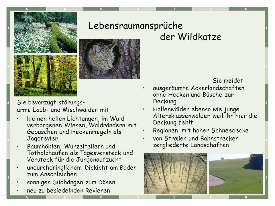 kleinen hellen Lichtungen, im Wald verborgenen Wiesen, Waldrändern mit Gebüschen und Heckenriegeln als Jagdrevier Baumhöhlen, Wurzeltellern und Tothol