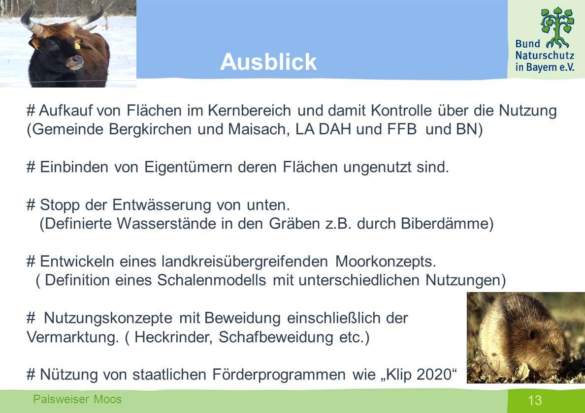 Palsweiser Moos 13 # Aufkauf von Flächen im Kernbereich und damit Kontrolle über die Nutzung (Gemeinde Bergkirchen und Maisach, LA DAH und FFB und BN)
