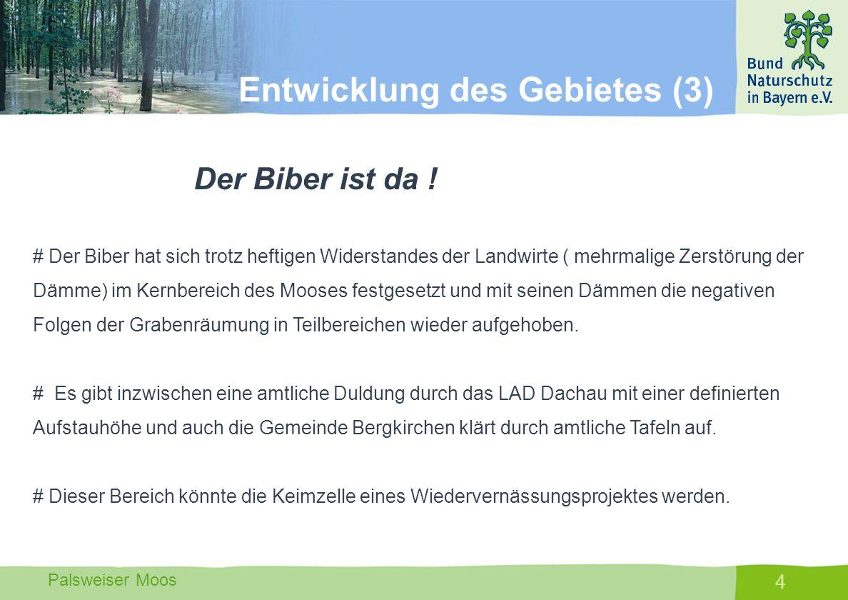 Palsweiser Moos 4 Der Biber ist da ! # Der Biber hat sich trotz heftigen Widerstandes der Landwirte ( mehrmalige Zerstörung der Dämme) im Kernbereich