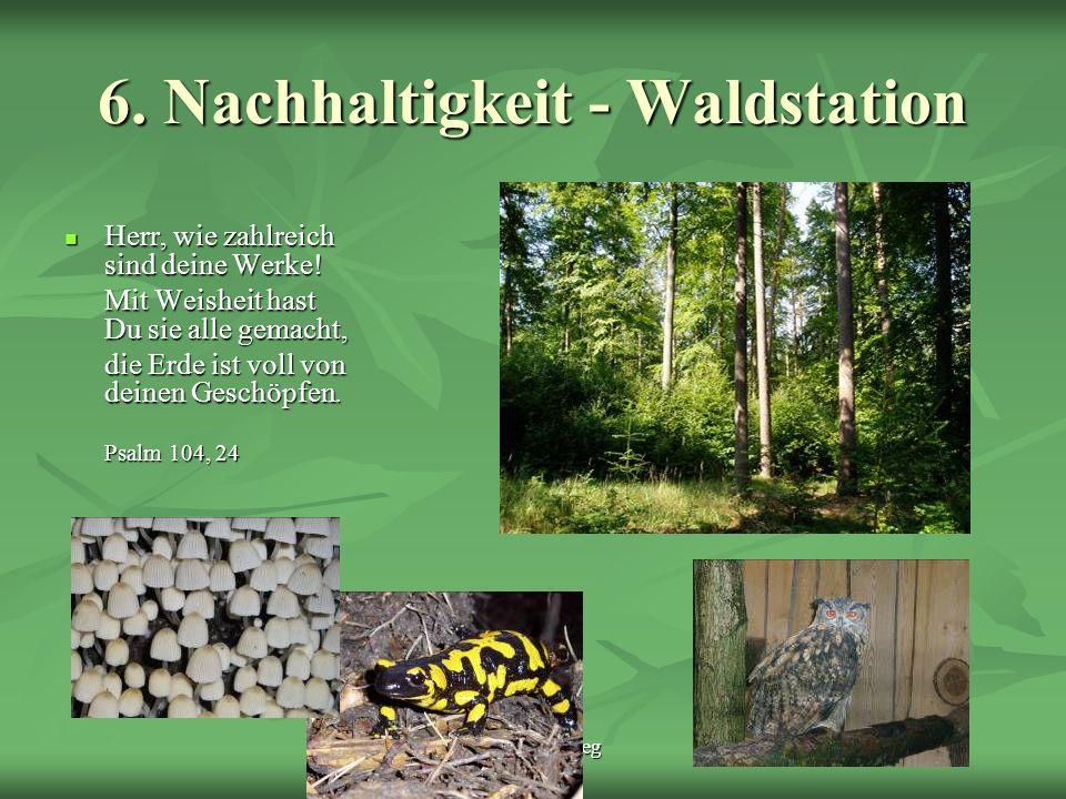 Schöpfungsweg 6. Nachhaltigkeit - Waldstation Herr, wie zahlreich sind deine Werke! Herr, wie zahlreich sind deine Werke! Mit Weisheit hast Du sie all