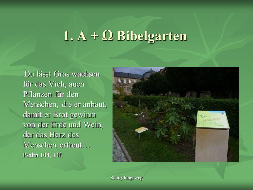Schöpfungsweg 1. A + Bibelgarten Du lässt Gras wachsen für das Vieh, auch Pflanzen für den Menschen, die er anbaut, damit er Brot gewinnt von der Erde