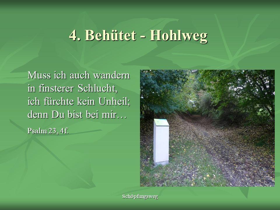 Schöpfungsweg 5.