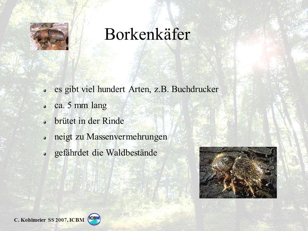 C. Kohlmeier SS 2007, ICBM Borkenkäfer es gibt viel hundert Arten, z.B.