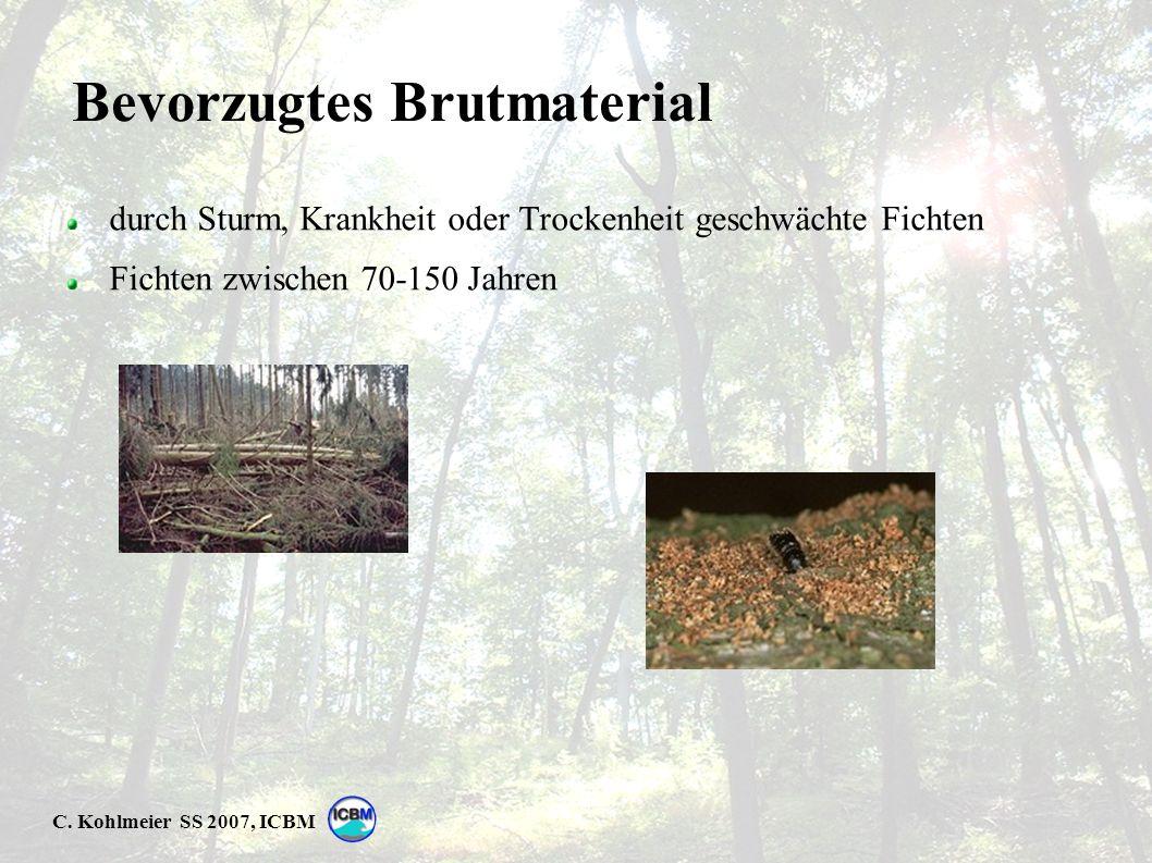 C. Kohlmeier SS 2007, ICBM Bevorzugtes Brutmaterial durch Sturm, Krankheit oder Trockenheit geschwächte Fichten Fichten zwischen 70-150 Jahren