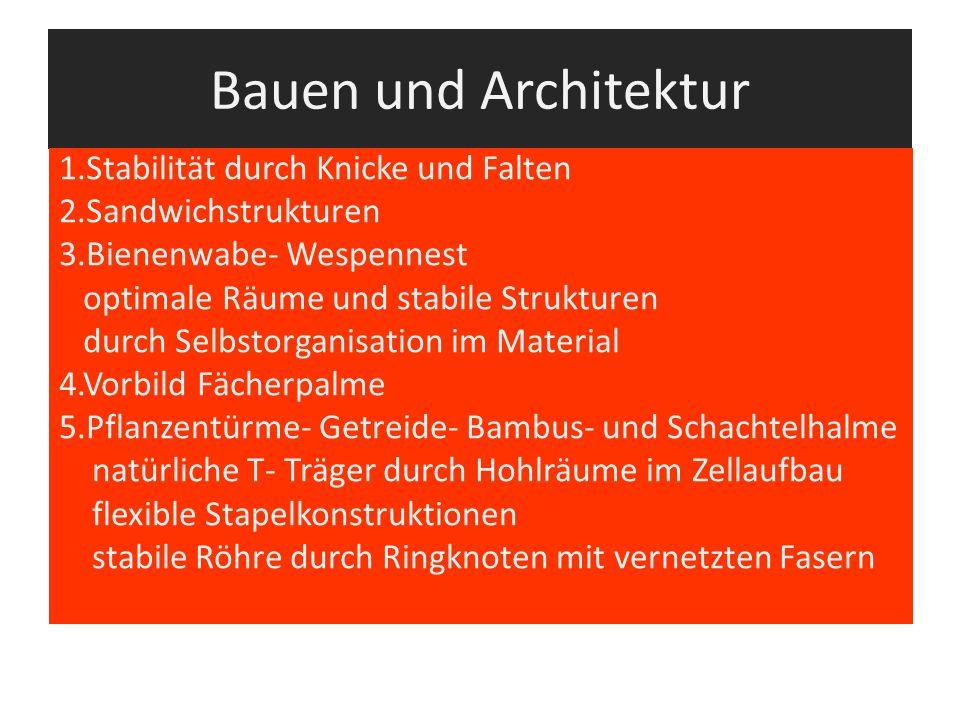 Bauen und Architektur 1.Stabilität durch Knicke und Falten 2.Sandwichstrukturen 3.Bienenwabe- Wespennest optimale Räume und stabile Strukturen durch S