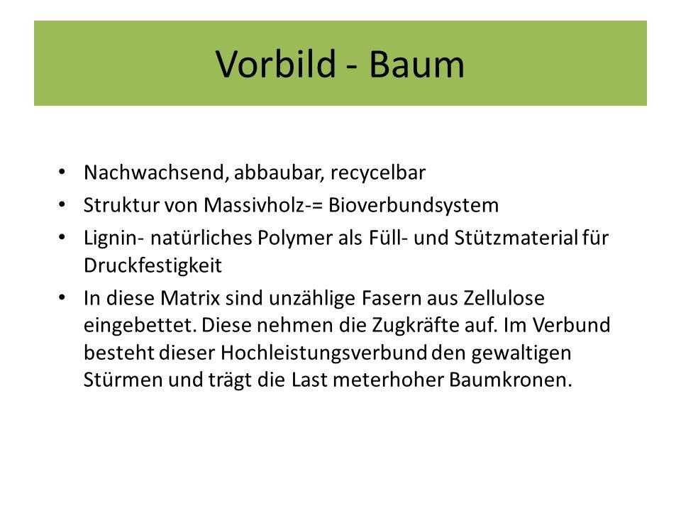 Vorbild - Baum Nachwachsend, abbaubar, recycelbar Struktur von Massivholz-= Bioverbundsystem Lignin- natürliches Polymer als Füll- und Stützmaterial f