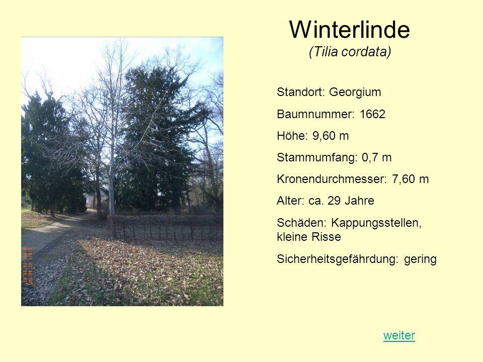Winterlinde (Tilia cordata) Standort: Georgium Baumnummer: 1662 Höhe: 9,60 m Stammumfang: 0,7 m Kronendurchmesser: 7,60 m Alter: ca. 29 Jahre Schäden: