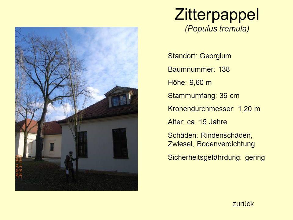 Zitterpappel (Populus tremula) Standort: Georgium Baumnummer: 138 Höhe: 9,60 m Stammumfang: 36 cm Kronendurchmesser: 1,20 m Alter: ca. 15 Jahre Schäde