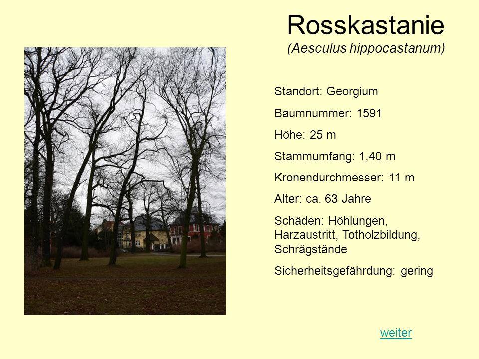 Rosskastanie (Aesculus hippocastanum) Standort: Georgium Baumnummer: 1591 Höhe: 25 m Stammumfang: 1,40 m Kronendurchmesser: 11 m Alter: ca. 63 Jahre S