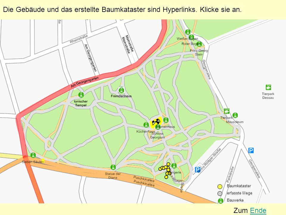 Rosskastanie (Aesculus hippocastanum) Standort: Georgium Baumnummer: 1590 Höhe: 25,50 m Stammumfang: 1,65 m Kronendurchmesser: 10,50 m Alter: ca.