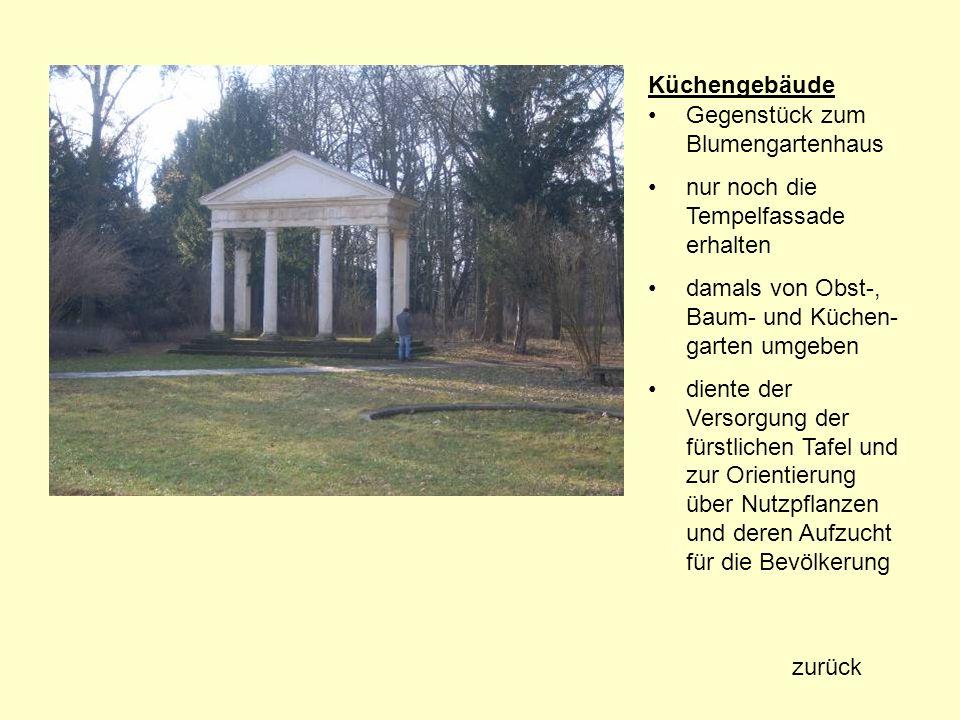 Gemeine Eibe (Taxus baccata) Standort: Georgium Baumnummer: 140 Höhe: 11,50 m Stammumfang: 1,25 m Kronendurchmesser: 10,10 m Alter: ca.