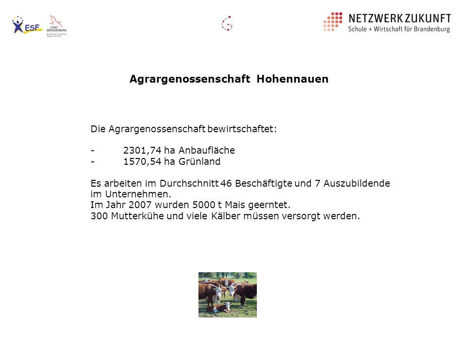 Agrargenossenschaft Hohennauen Die Agrargenossenschaft bewirtschaftet: - 2301,74 ha Anbaufläche - 1570,54 ha Grünland Es arbeiten im Durchschnitt 46 B