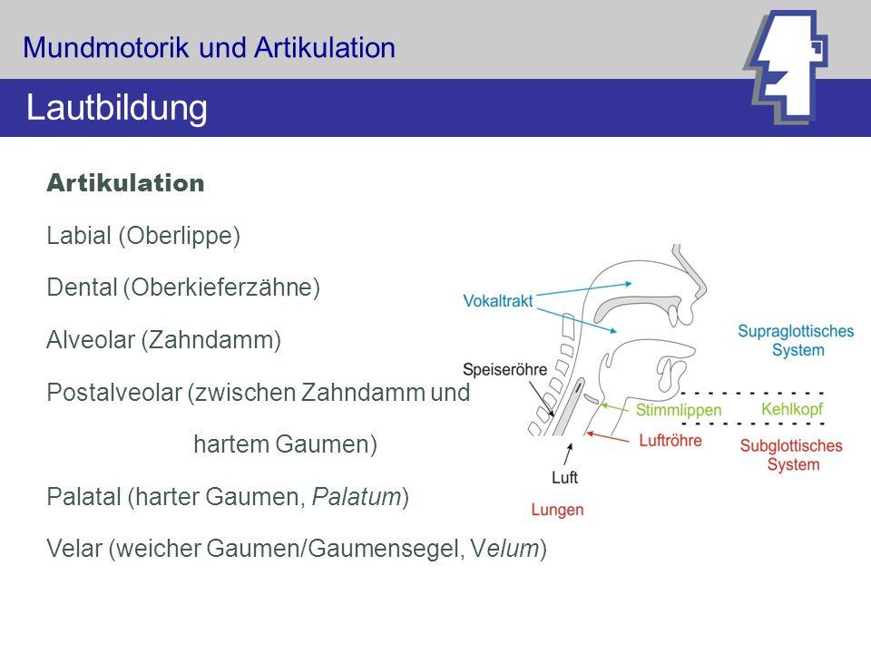 Artikulation Labial (Oberlippe) Dental (Oberkieferzähne) Alveolar (Zahndamm) Postalveolar (zwischen Zahndamm und hartem Gaumen) Palatal (harter Gaumen