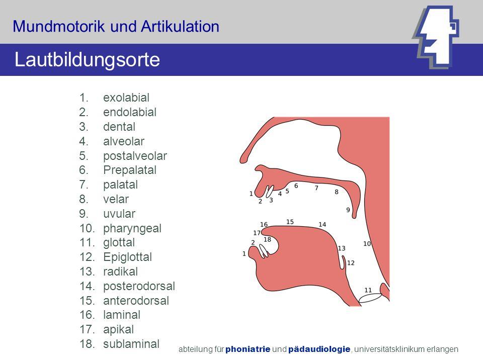 abteilung für phoniatrie und pädaudiologie, universitätsklinikum erlangen 1.exolabial 2.endolabial 3.dental 4.alveolar 5.postalveolar 6.Prepalatal 7.p