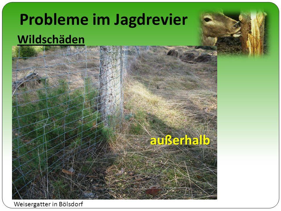 Probleme im Jagdrevier Wildschäden außerhalb Weisergatter in Bölsdorf