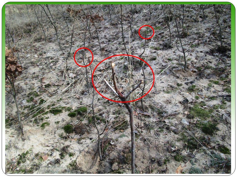 Probleme im Jagdrevier Wildschäden