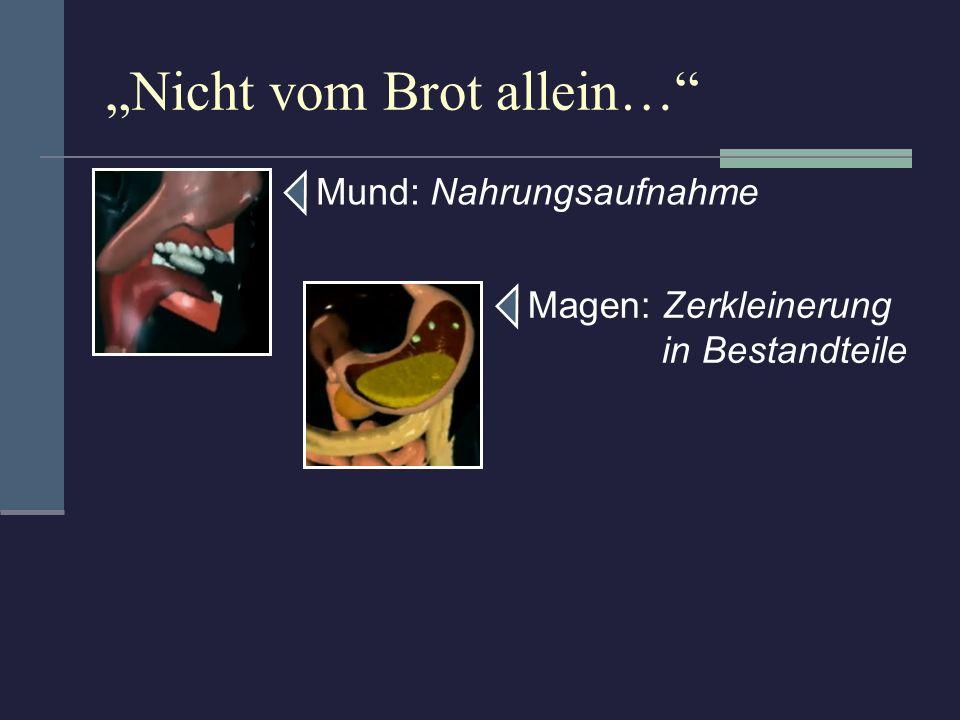 Nicht vom Brot allein… Mund: Nahrungsaufnahme Magen: Zerkleinerung in Bestandteile Dünndarm: Aufnahme der Nährstoffe