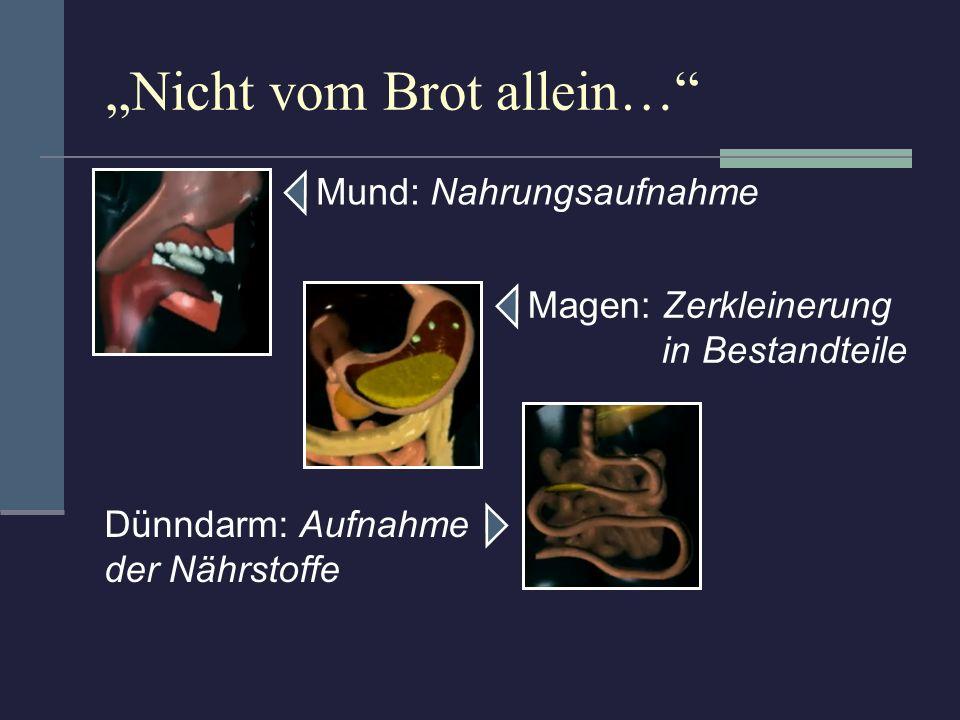 Nicht vom Brot allein… Mund: Nahrungsaufnahme Magen: Zerkleinerung in Bestandteile Dünndarm: Aufnahme der Nährstoffe Dickdarm: Ausscheidung