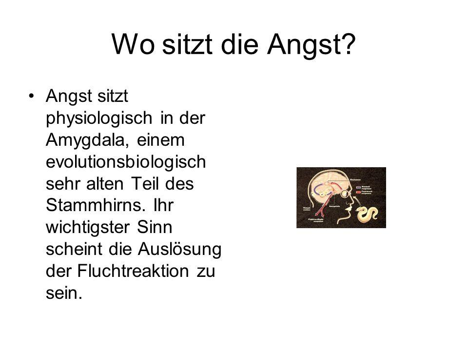 Wo sitzt die Angst? Angst sitzt physiologisch in der Amygdala, einem evolutionsbiologisch sehr alten Teil des Stammhirns. Ihr wichtigster Sinn scheint