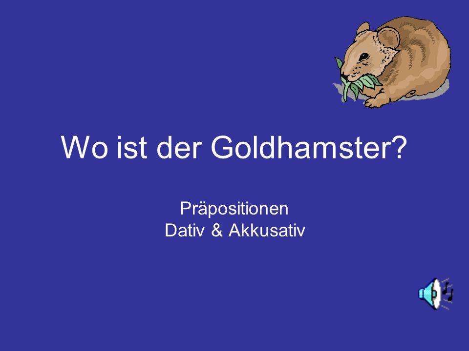 Wo ist der Goldhamster? Präpositionen Dativ & Akkusativ