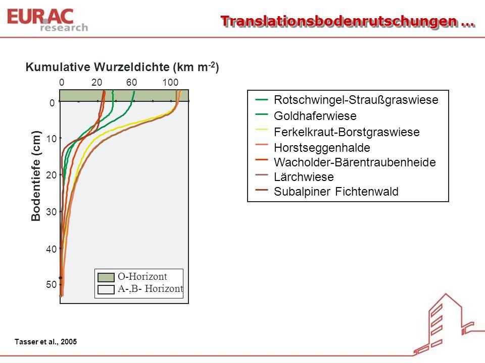 020100 50 40 30 20 10 0 Kumulative Wurzeldichte (km m -2 ) 60 O-Horizont A-,B- Horizont Bodentiefe (cm) Rotschwingel-Straußgraswiese Goldhaferwiese Fe