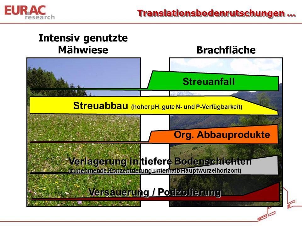 Translationsbodenrutschungen … Intensiv genutzte Mähwiese Brachfläche Streuanfall Streuabbau (hoher pH, gute N- und P-Verfügbarkeit) Org. Abbauprodukt