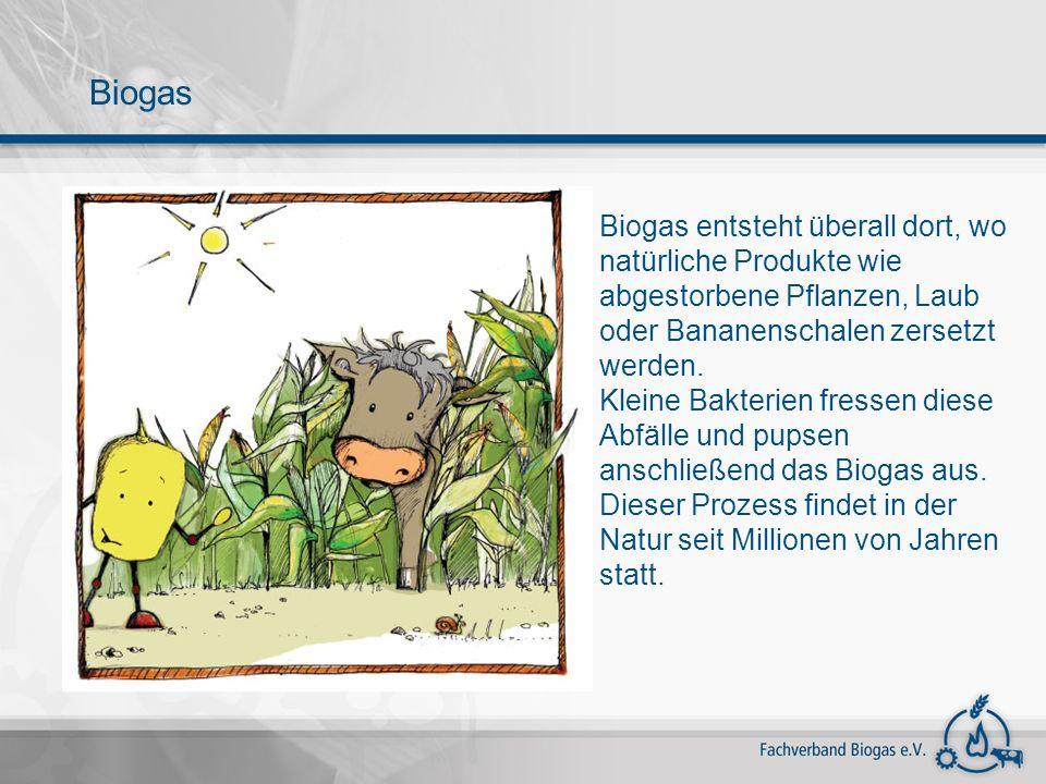 Biogas entsteht überall dort, wo natürliche Produkte wie abgestorbene Pflanzen, Laub oder Bananenschalen zersetzt werden. Kleine Bakterien fressen die