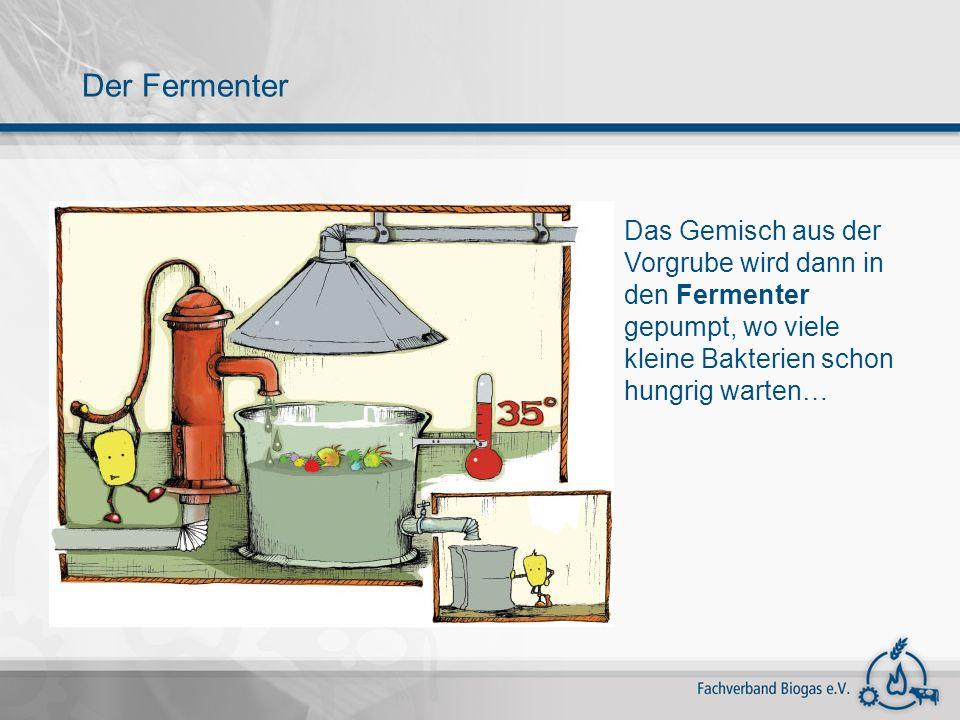 Die hungrigen Bakterien fressen das Gemisch aus Gülle, Pflanzen und Essensresten und erzeugen dabei Biogas.
