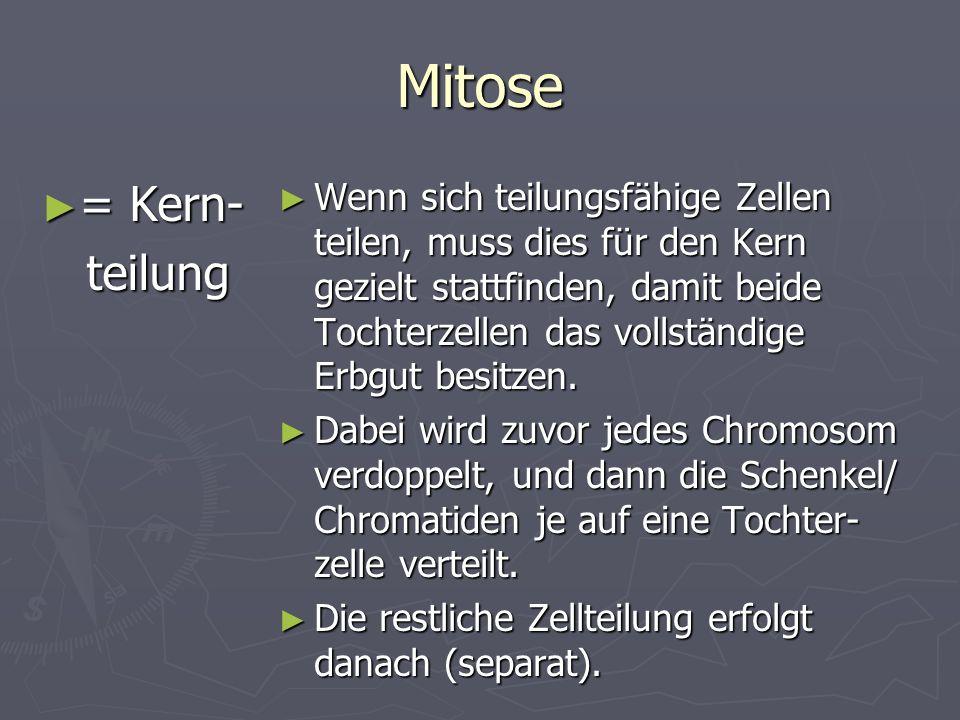 Mitose = Kern- = Kern- teilung teilung Wenn sich teilungsfähige Zellen teilen, muss dies für den Kern gezielt stattfinden, damit beide Tochterzellen d