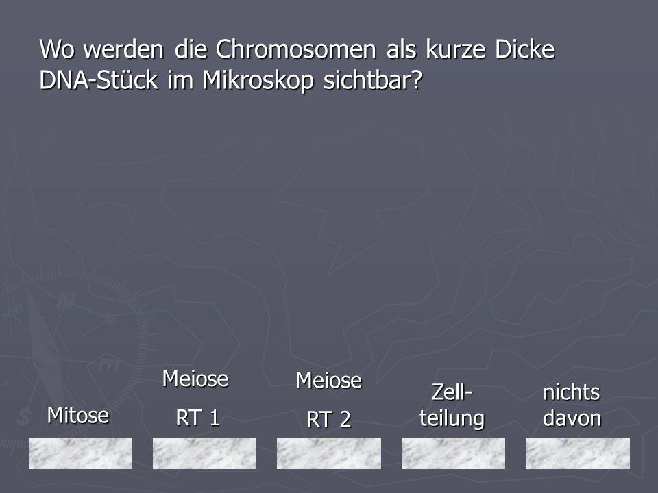 Mitose Mitose Meiose RT 1 RT 1 nichts davon Meiose RT 2 Zell- teilung Wo werden die Chromosomen als kurze Dicke DNA-Stück im Mikroskop sichtbar?