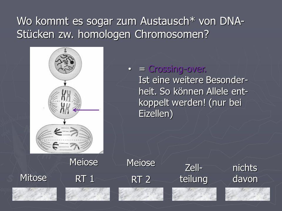 Mitose Mitose Meiose RT 1 RT 1 nichts davon Meiose RT 2 Zell- teilung Wo kommt es sogar zum Austausch* von DNA- Stücken zw. homologen Chromosomen? = C
