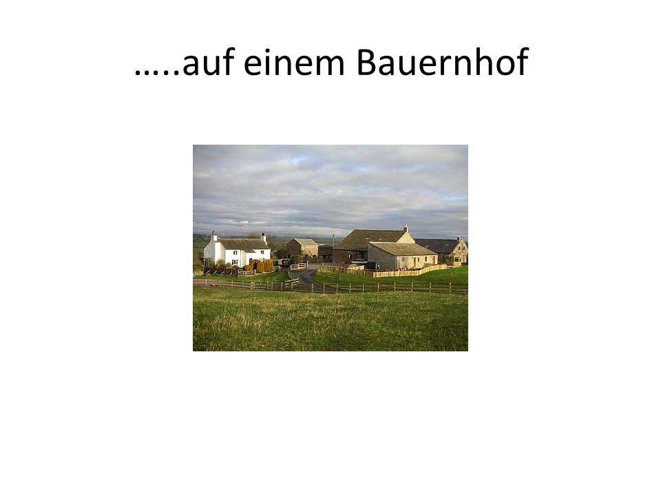 …..auf einem Bauernhof