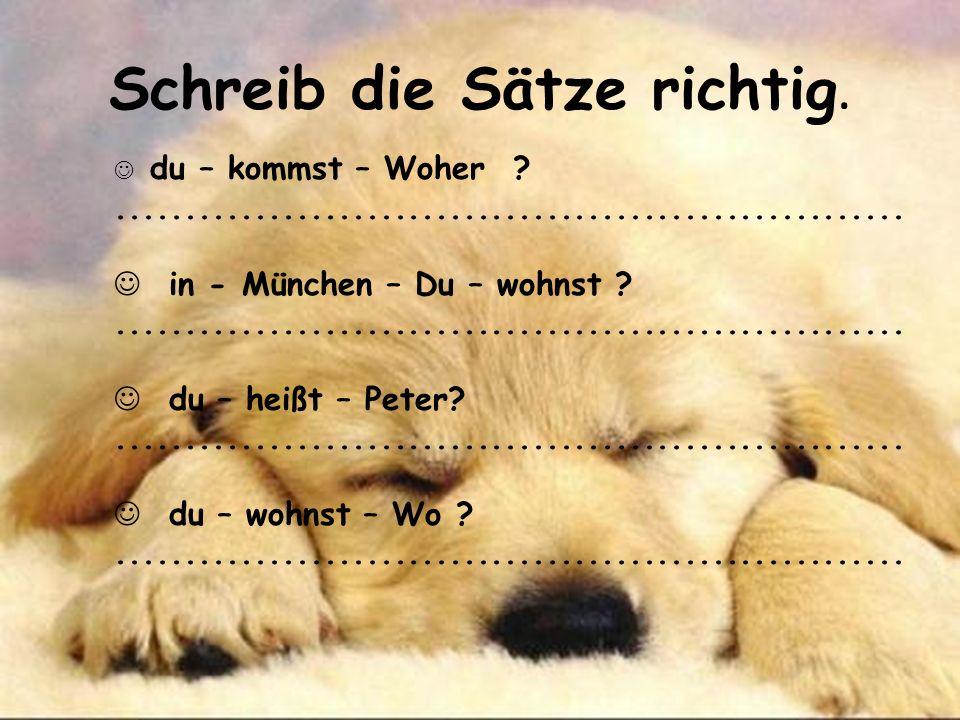 Schreib die Sätze richtig. du – kommst – Woher ?......................................................... in - München – Du – wohnst ?................