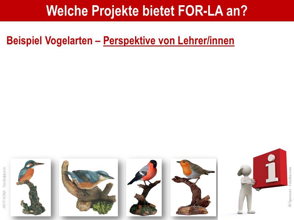 Welche Projekte bietet FOR-LA an.