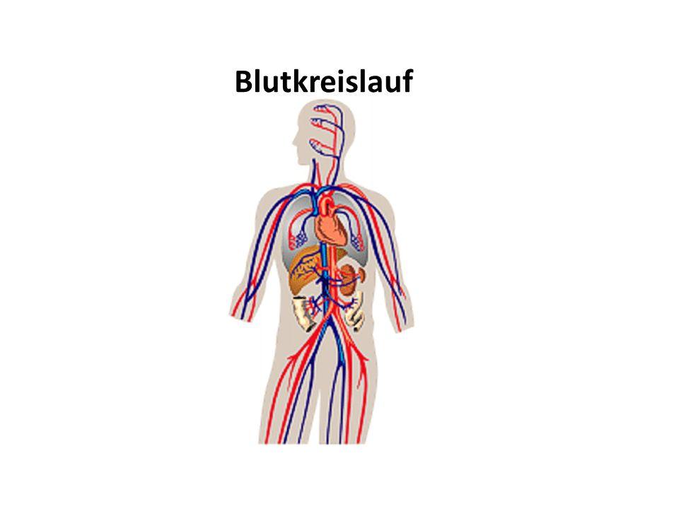 Chronische Durchblutungsstörung Untersuchung 1.Klinisch 2.Ultraschall: Doppler/Duplex 3.Bildgebend: Computer Tomographie/Magnetresonanz/Angiographie