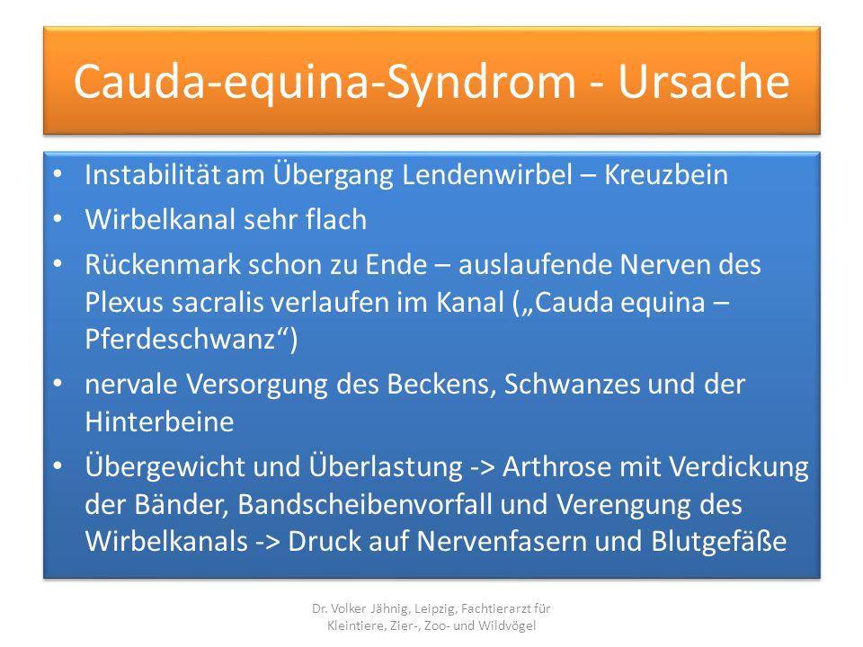 Cauda-equina-Syndrom - Ursache Instabilität am Übergang Lendenwirbel – Kreuzbein Wirbelkanal sehr flach Rückenmark schon zu Ende – auslaufende Nerven