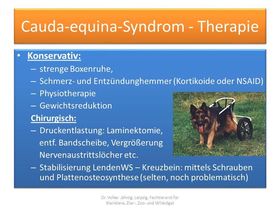 Cauda-equina-Syndrom - Therapie Konservativ: – strenge Boxenruhe, – Schmerz- und Entzündunghemmer (Kortikoide oder NSAID) – Physiotherapie – Gewichtsr