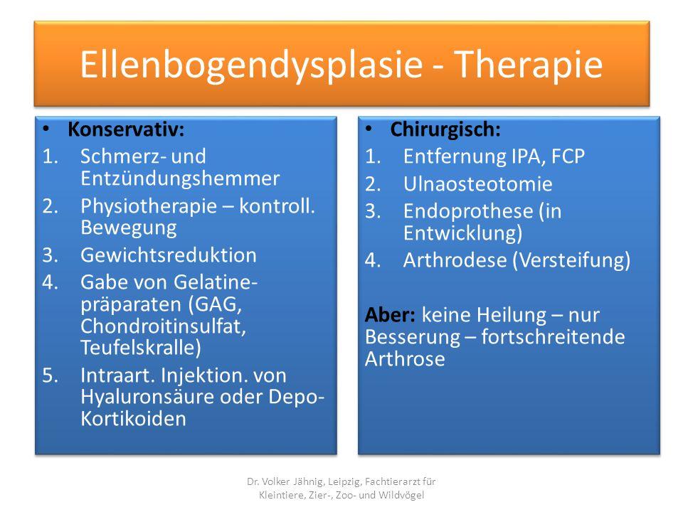 Ellenbogendysplasie - Therapie Konservativ: 1.Schmerz- und Entzündungshemmer 2.Physiotherapie – kontroll. Bewegung 3.Gewichtsreduktion 4.Gabe von Gela